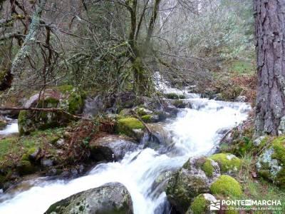 Tejos Milenarios de Valhondillo -Tejos de Rascafría; excursiones comunidad de madrid;empresas de se